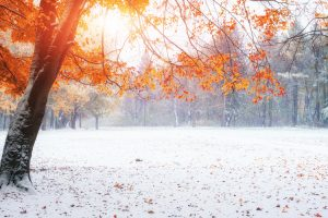 Will Your Year-End Process Be as Seamless as Nature's Winter Transition?